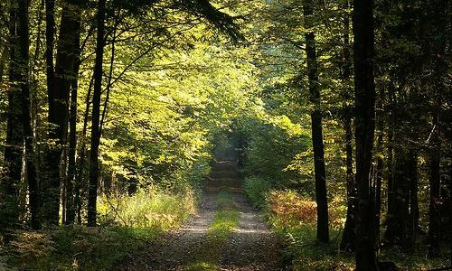 Bialowieza, el último bosque virgen