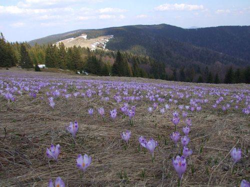 Parque Nacional Gorce