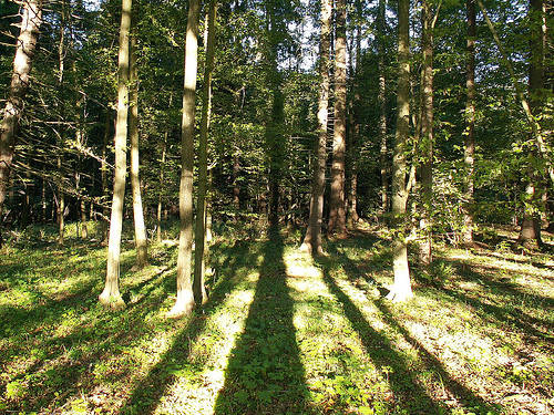 Bosque Bialowieza